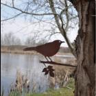 Metalbird Merel metalen vogel voor in de tuin