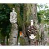 'IJsje op een stokje' gemaakt met verschillende soorten zaden waar heel veel tuinvogels dol op zijn. Pure verwennerij voor vogels dus!