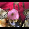 Chique en kleurrijke vierkante zijden sjaal Marten & Oopjen XL scoor je bij amstory.nl